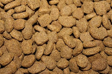 Dog Food Wiltshire