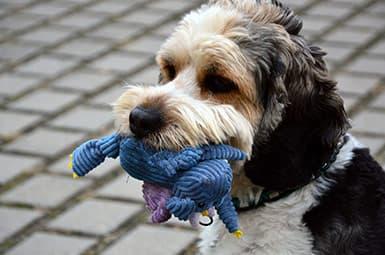 Purton Dog Toys