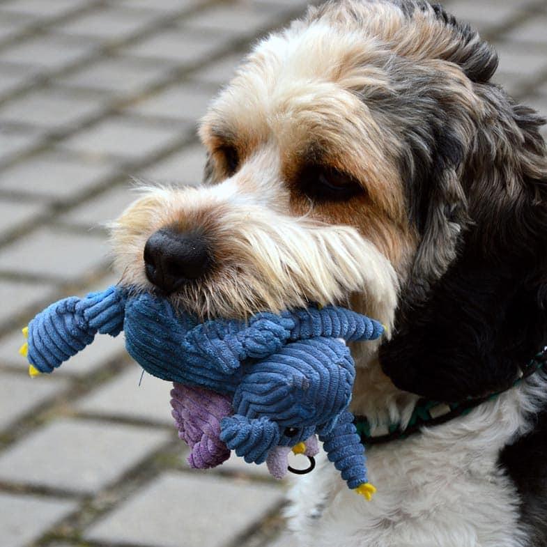 Dog Toys Wiltshire